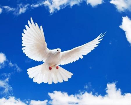 «Дворец молодежи Республики Марий Эл» обращается с просьбой к жителям города и заводчикам голубей
