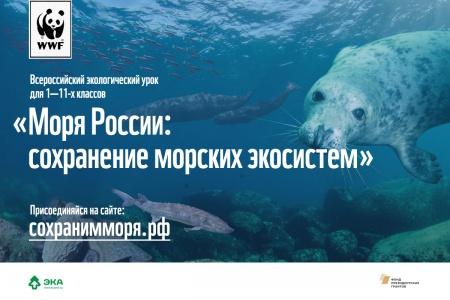 Экоурок о сохранении морских экосистем
